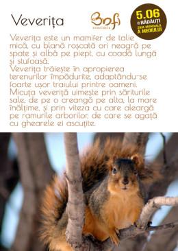ziua-mediului-veverita