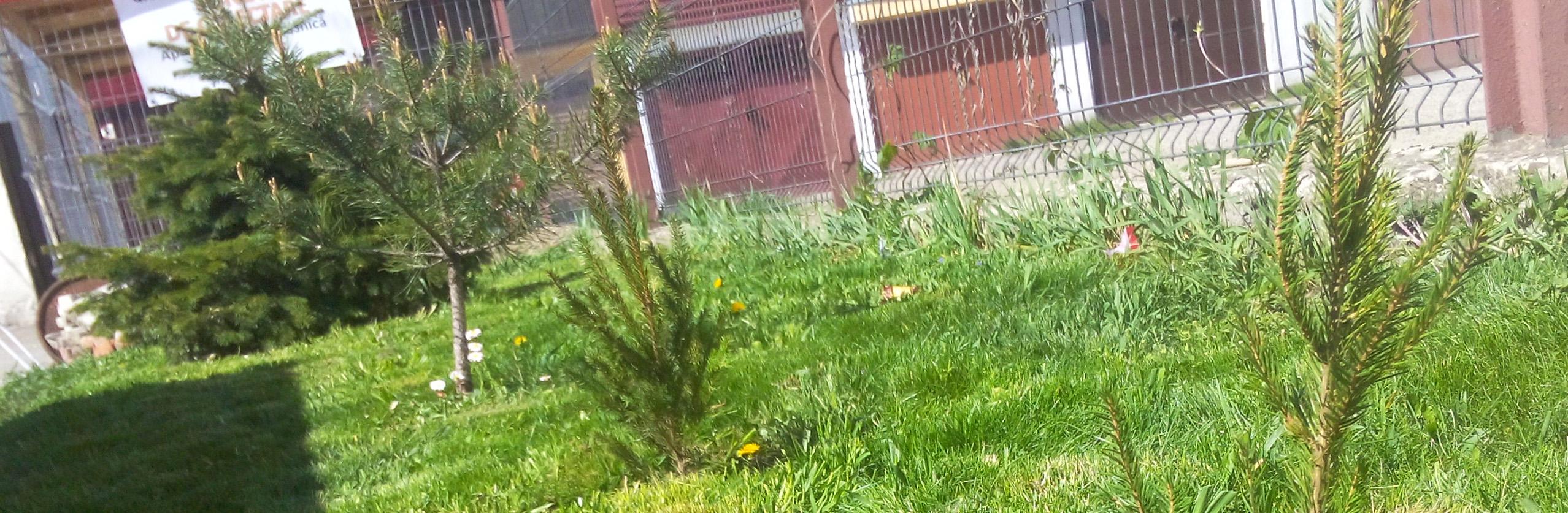 Am plantat de Ziua pământului, 22 aprilie